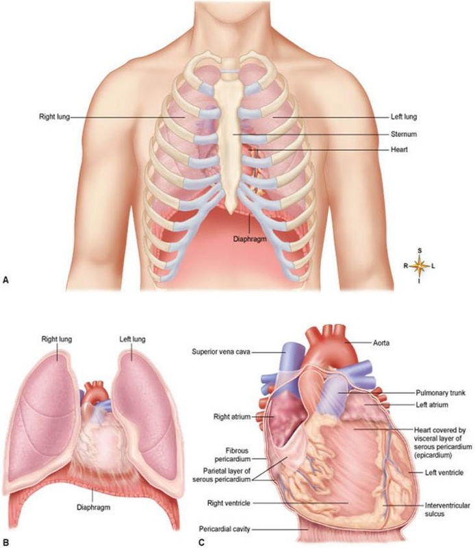 Cardiovascular System Dr Ms Classes Rock